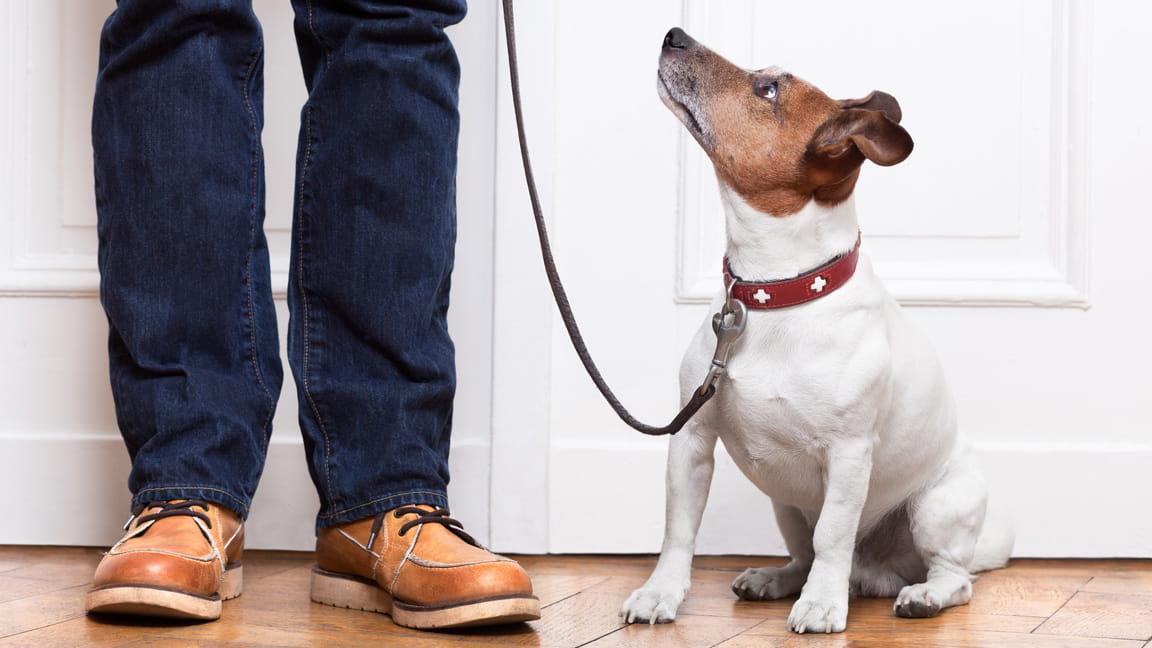 un perro esperando para salir a caminar con su dueño
