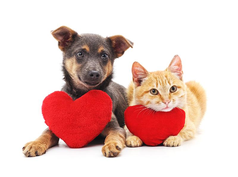perrito gatito corazón
