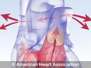 Animación de la anatomía de la válvula cardíaca